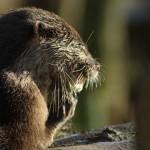 Mr Otter