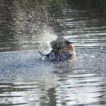 Duck bathtime