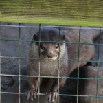 Mr Otter - LET ME OUT!
