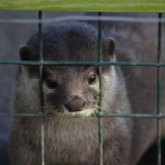 Mr Otter - LET ME OUT... please...