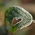 Natural hearts - leaf